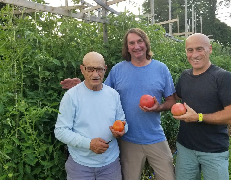 White Silo Farm and Winery Owners, Eric Gorman and Ralph Gorman, proudly show off this year's tomato crop with friend and fellow enthusiast, Eric Olsen